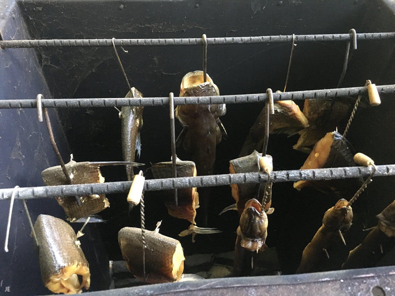 Fische in der Räuchertonne Julius.jpeg