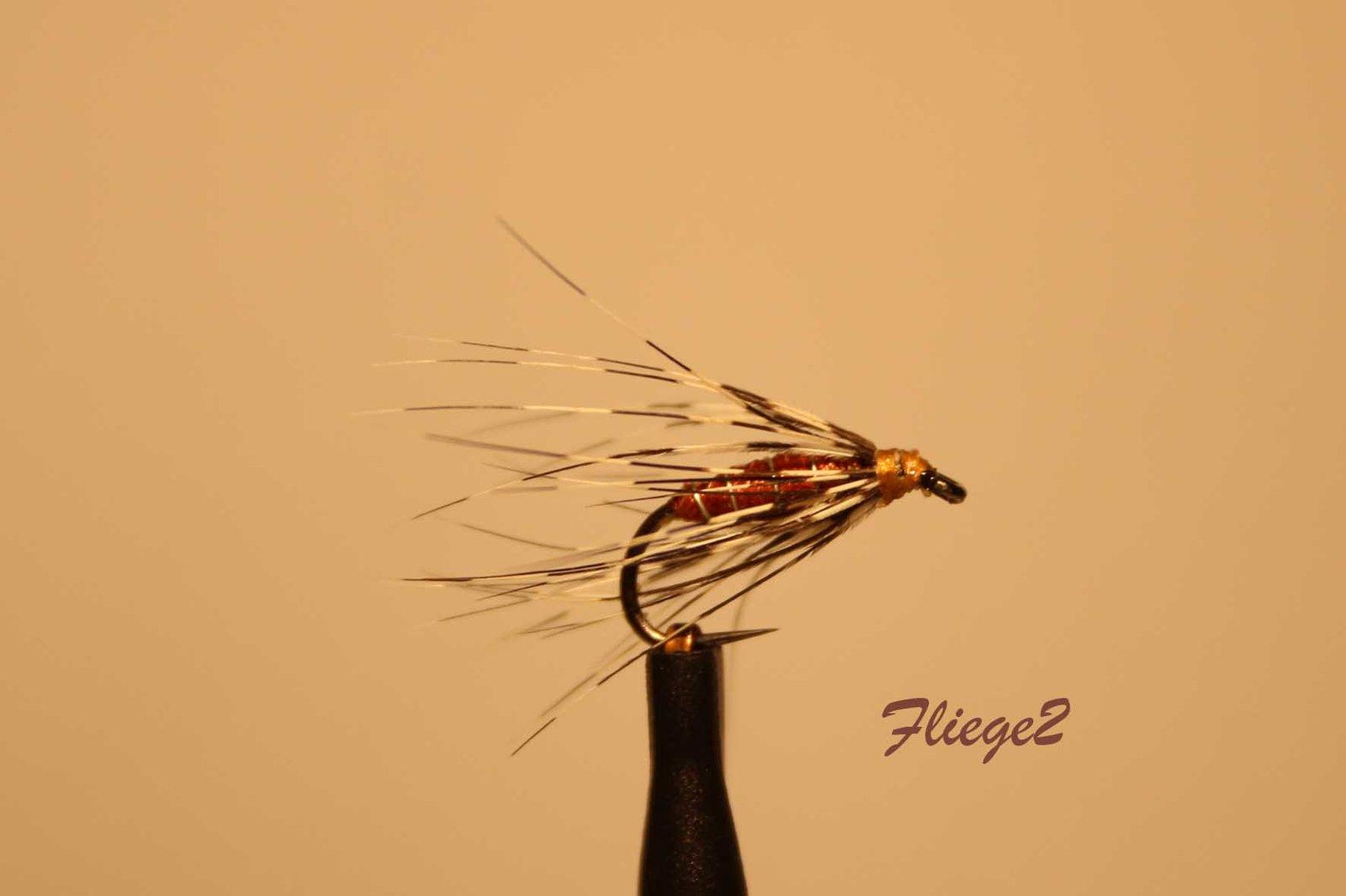 Fliege2_IMG_1767.jpg