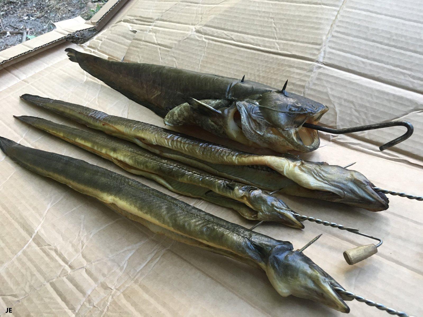 geräucherte Fische Julius.jpeg
