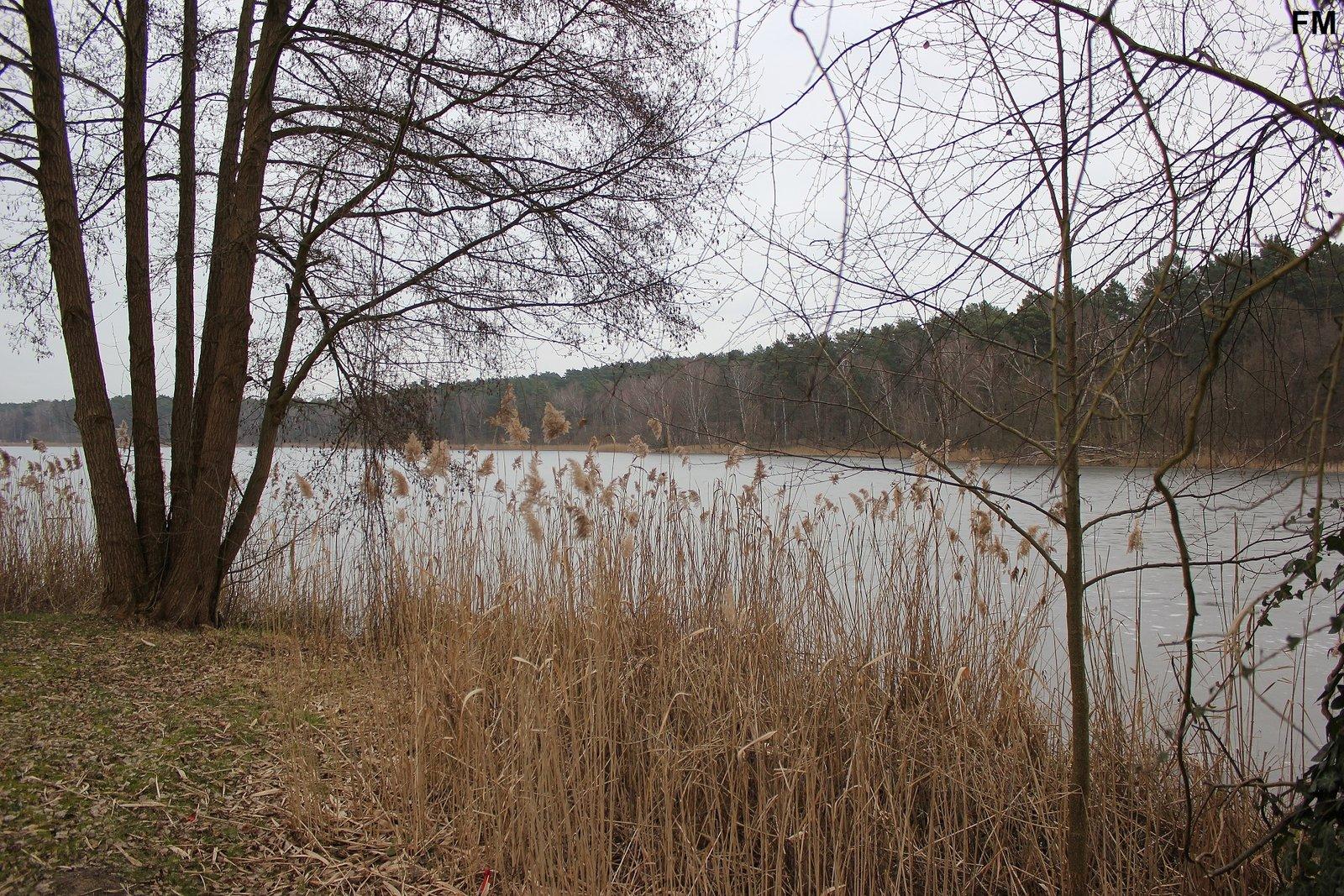 Petersdorfer See bei Petersdorf (3).JPG