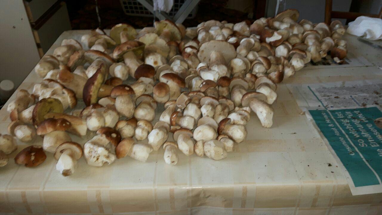 Pilze aus dem Süden.JPG