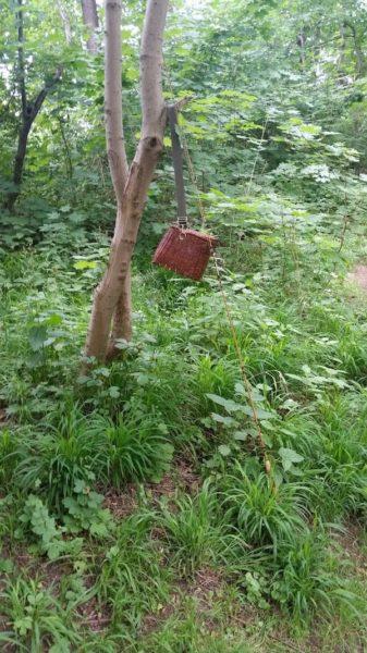 Fliegenkorb und Fliegenrute am Baum