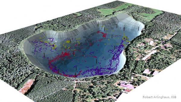 Kleiner Döllnsee: 3D Modell mit Aufenthaltsort besenderter Fische