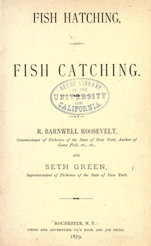 Fish hatching and fish catching