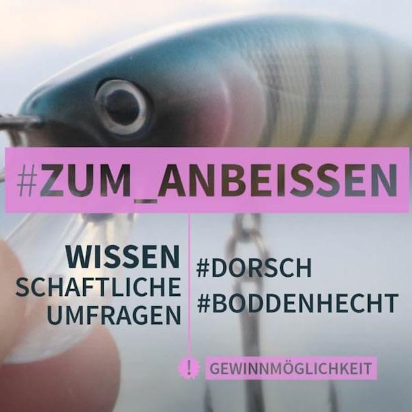 Umfrage Hecht & Dorsch