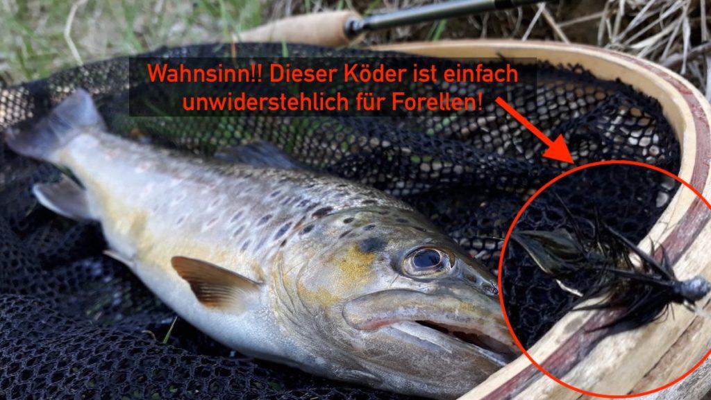 Forelle Streamer