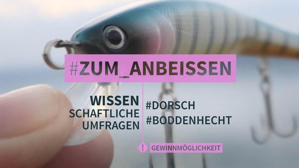Umfrage Dorsch&Boddenhecht