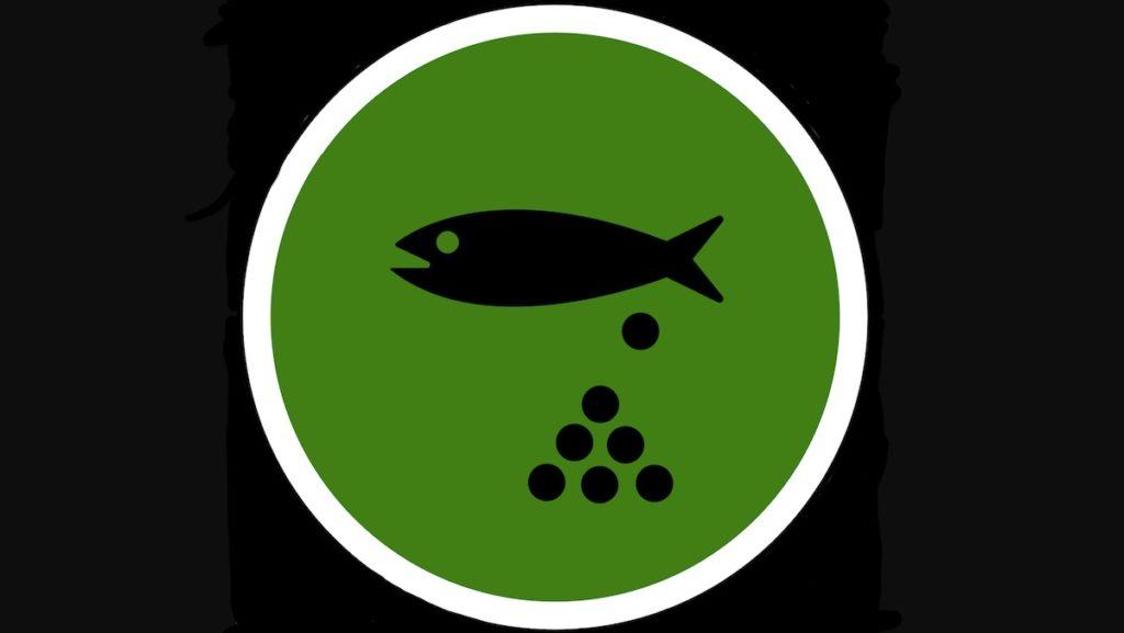 Schonzeit – wenn Fische laichen